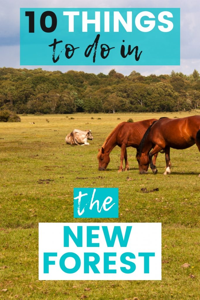 10 Things To Do In The New Forest